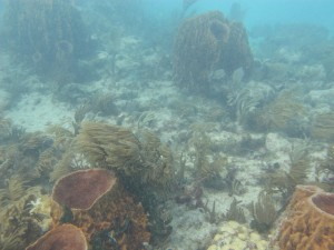 Sponge dominated reef of the lower Keys.